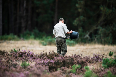 rutting: Forester spreading food for red deer in rutting season. National Park Hoge Veluwe. Stock Photo
