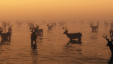 Group of red deer standing in water in morning mist. Stock Photo