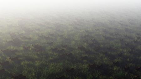 aerial animal: Aerial of herd of red deer in misty field.