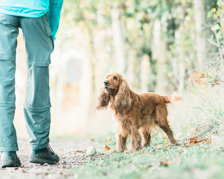 cocker: Cocker spaniel and owner with tennis-ball on rural path.