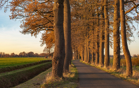 vanishing point: Autumn trees along rural road in low sunlight. Stock Photo