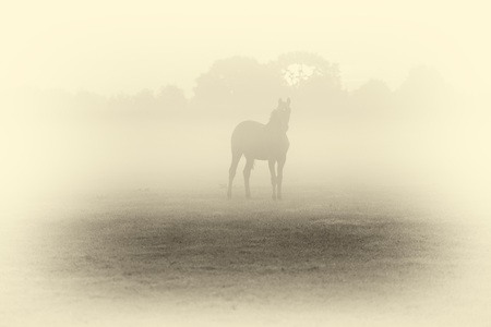 Antique plate photography of silhouette of horse in foggy field at dawn.