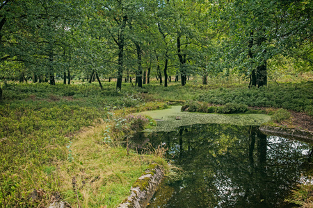 Little pond in forest with deciduous trees. Stock Photo