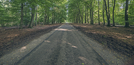 tire tracks: Country road in forest on sunny day. Panorama shot.