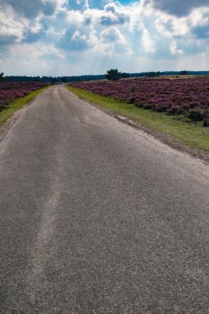 Single lane road in blooming moorland under cloudy sky.