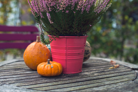 Pumpkins and heather in pink bucket on wooden garden table.