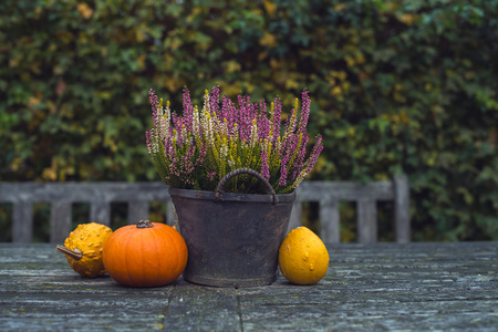 Pumpkins and heather in bucket on wooden garden table. Stock Photo