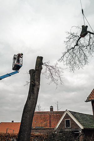 Tree surgeon in platform and large branch lifted by crane.