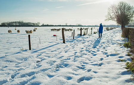 Woman walking in dutch rural winter landscape.