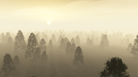 Misty pine forest at dawn.