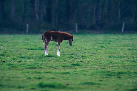 Foal in meadow at dusk. Stock Photo