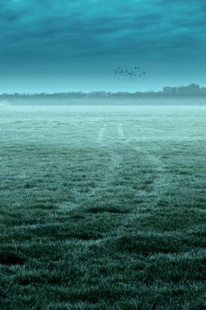 Tire tracks in misty meadow under cloudy sky with birds. 版權商用圖片