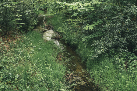 Little stream in forest in spring.
