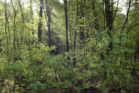 Trees and vegetation of forest in early morning sunlight in spring. Imagens