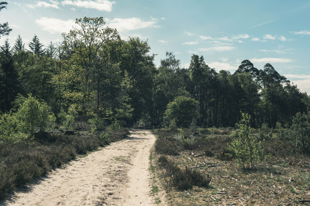 Sand path into forest on sunny day in spring. Imagens