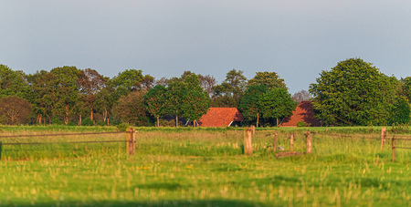 Farmhouse with trees in evening sunlight in spring.