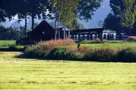 Bird of prey perched on wooden pole in sunny countryside. Imagens