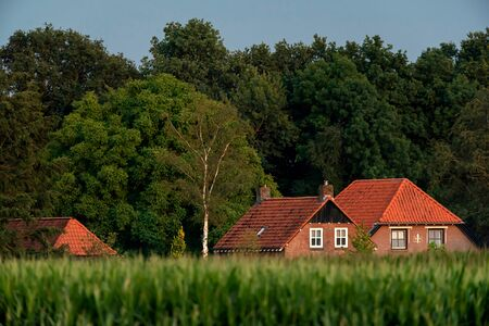 Farmhouse at forest edge in summer. Stockfoto