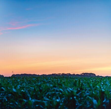 Farmland in dutch countryside at dusk.