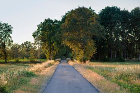 Country road in summer in evening sunlight.