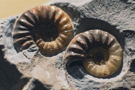 Photo en gros plan de fossile dans la pierre.