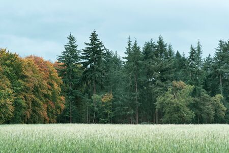 Agricultural field on the edge of an autumn forest with different tree species.