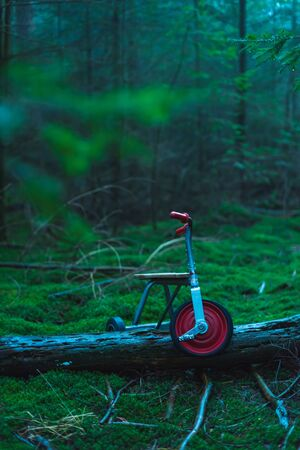 Abandoned kids tricycle on mossy ground in fir forest.