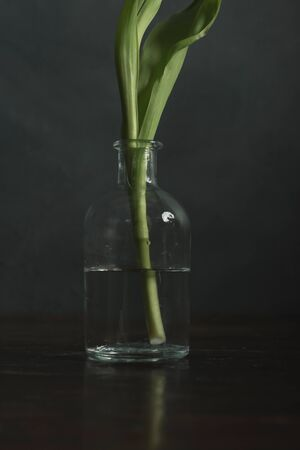 Stem of tulip in glass vase on wooden table in front of gray wall.
