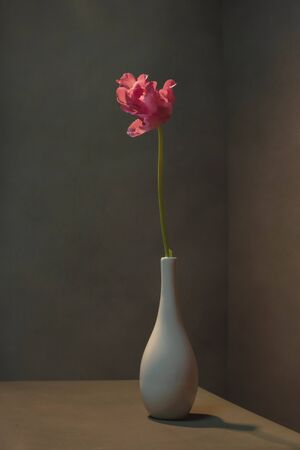 Pink tulip in white vase in empty grey room. Banco de Imagens