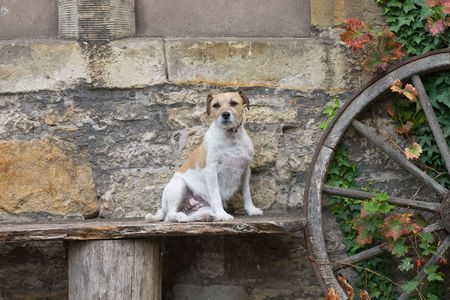 Dog sits on a bench near the wall