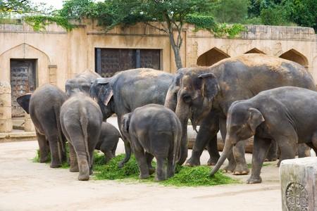 Los elefantes comen pasto en un primer plano de la antigua muralla