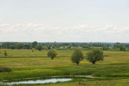 Colorido paisaje de verano con un r�o y de ca�a
