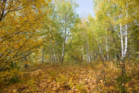 Autumn Forest with Yellow and Green Trees Stock Photo