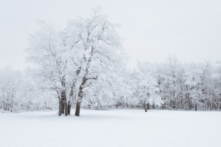 View of Trees Covered by Snow Stock Photo