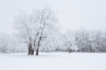 Weergave van bomen bedekt met sneeuw
