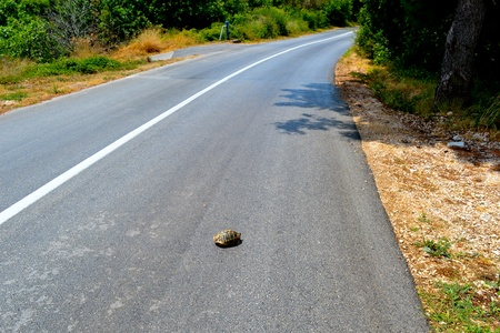Turtle who stopped in the middle of the road Stock Photo