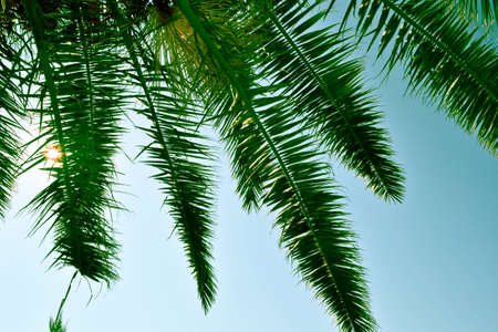 Under a palm tree where you see blue sky through the leaves photo