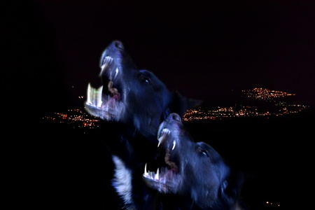 resemble: two black howling dogs that resemble wolves
