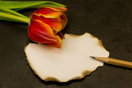 piece of paper with no message with a tulip and a pen lying on the side Stock Photo