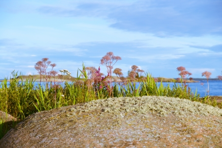 islet in the archipelago with plants and flowers Stock Photo