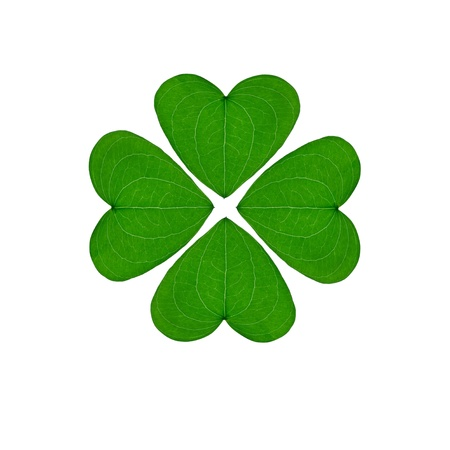 greem four-leaf clover, an good luck charm on a white background