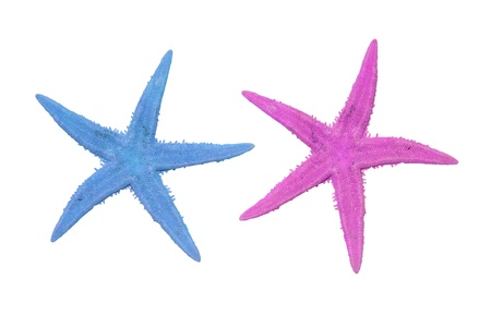 two starfish in different colors, pink and blue on a white background Stock Photo