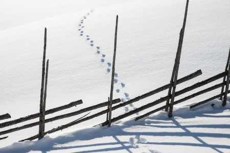 traces of animals in the snow with a wooden fence that provides a beautiful shadow in the snow