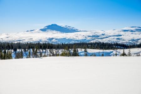 unspoiled: Imagen de invierno en la monta�a pelada, �rboles y una gran cantidad de nieve en una naturaleza virgen