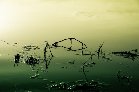 yellow-green image on a lake that is poisoned and polluted