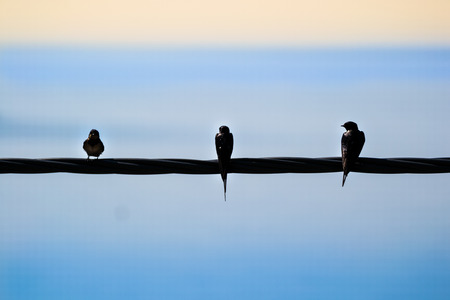 three swallows sitting on a power line with the sea and the horizon behind them