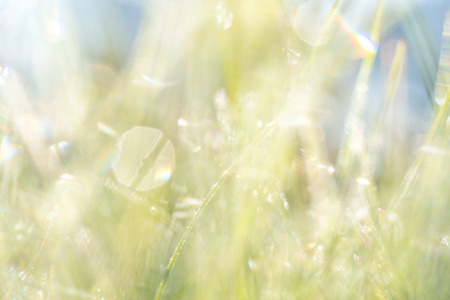 beautiful background of unfocused green grass an early morning Stock Photo
