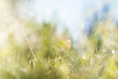 bright diffuse background with grass and sky Imagens