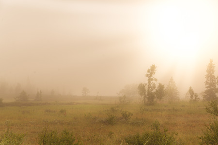 early foggy morning in the Swedish mountains with the sun just come up