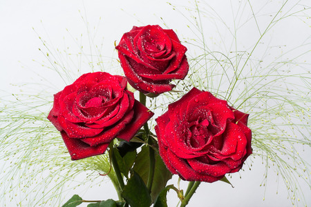 three beautiful red roses with green leaves and white background